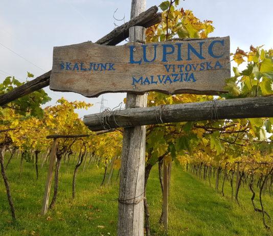 Lupinc